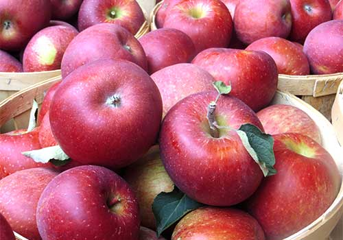 Acres of beautiful apple orchards await your visit to Melick's Town Farm in Oldwick, New Jersey