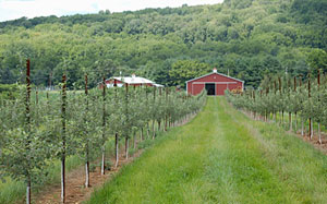 Farm fresh produce including pick-your-own apples, pears, peaches, pumpkins, and flowers at Melick's Town Farm in Oldwick and Califon, New Jersey!